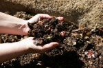 worms turn garden and kitchen waste into nutrient rich castings