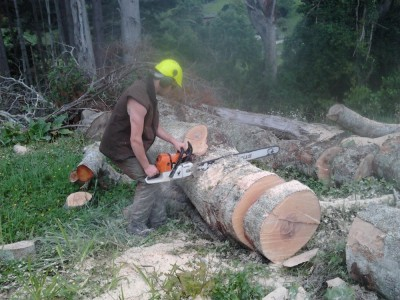 cutting firewood after felling