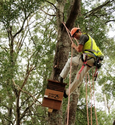 Tim installs a bat home in a Hamilton Gully