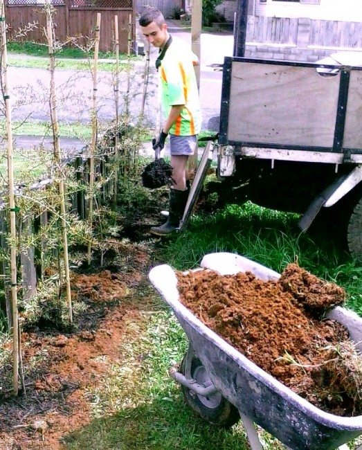 the Greenfootprint team plant a new totara hedge