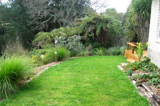 easy care natives and fruit trees blending garden and gully