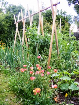 a beautiful edible organic garden