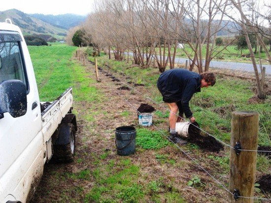 the GreenFootprint team planting  native shelter on a Waikato dairy farm.